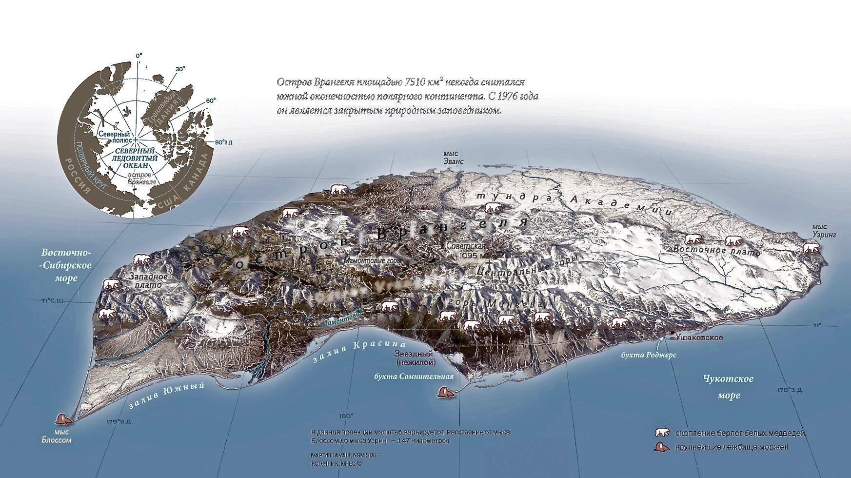 Заповедник остров врангеля остров врангеля - это небольшой остров, расположенный на территории россии
